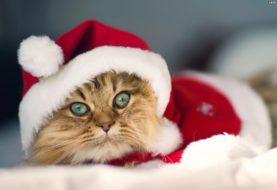 Wesołych Świąt od redakcji