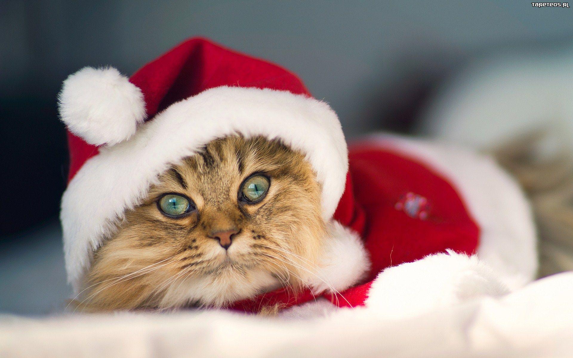 Photo of Wesołych Świąt od redakcji